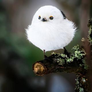 白噪音•助眠 森林 清脆 鸟叫