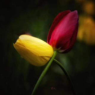 碑林路人:《藏在心里的春天》节选一