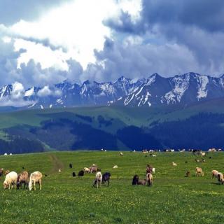 天苍苍,野茫茫,风吹草低见牛羊。