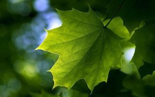 做一片美的叶子??