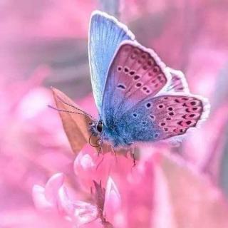 《你若盛开,蝴蝶自来》刘景茹/文,星河/播