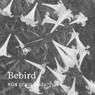 Bebird #04 grain buds小满