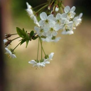 春天像一只莫须有的手 朗诵者:CDN