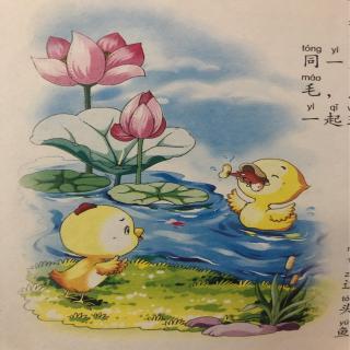 114.要学游泳的鸡🐔