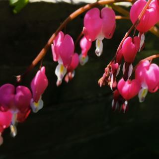 《春天,那一场场花瓣雨》