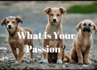 英语朗读 What is your passion?- せつ❄️