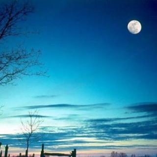 《爱是一棵月亮树》作者:周庆荣 合诵:千纸鹤 南飞