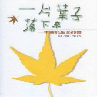 睡前小故事396  绘本《一片叶子落下来》