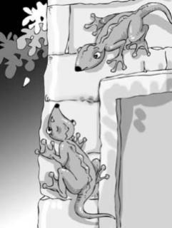赛锐思睡前故事《小壁虎的旅行》