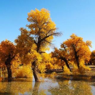 秋日最佳旅行目的地