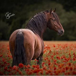 乱花渐欲迷人眼,浅草才能没马蹄。