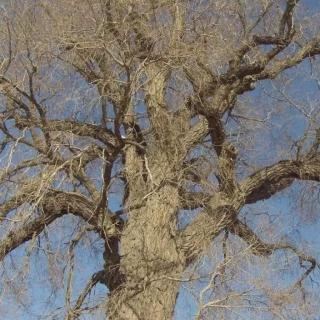 刘亮程:树会记住许多事