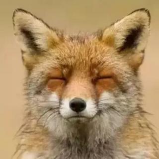 大小耳朵讲|十八只狐狸,十八种心态,十八种结果。你是哪一只?