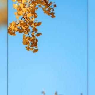 现实容不下太多念想,回忆只能取其精华 - 暖阳🍀✨