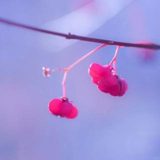《愿秋风不燥,岁月静好》作者杜登龙/朗诵顺其自然