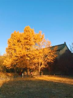 秋夜—鲁迅《世界上最经典的散文》