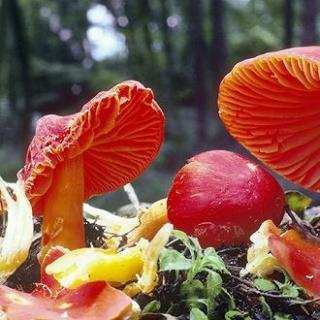 别碰,我有毒,了解毒蘑菇的那些事儿
