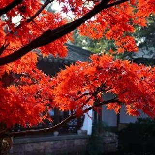林清玄   我为什么要在秋天看枫叶