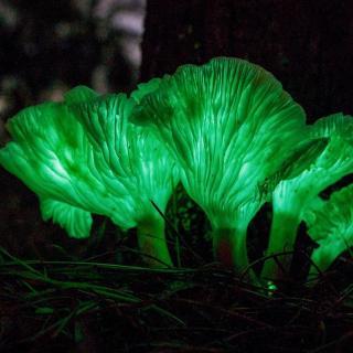 【盘点】5种闻所未闻的奇特植物