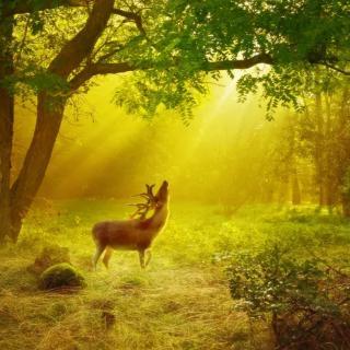 老黄读诗《阳光照在需要它的地方》宇向