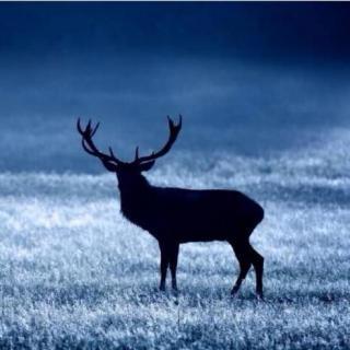 去追一只鹿-山竹