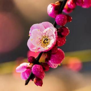 惜余春·急雨收春