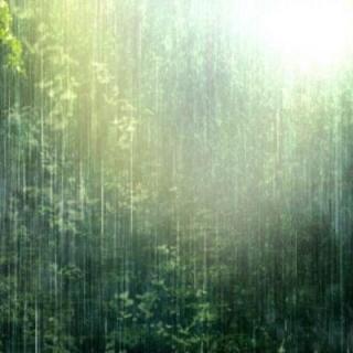夜听白噪音——大自然的下雨声16深度催眠