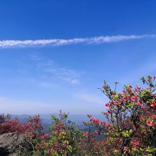 【纯音乐】迎着风,与春天撞个满怀。