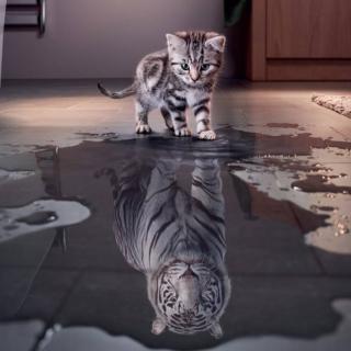 老虎照镜子