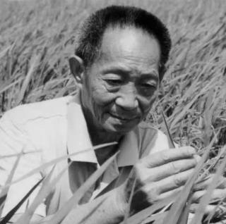 妈妈,稻子熟了