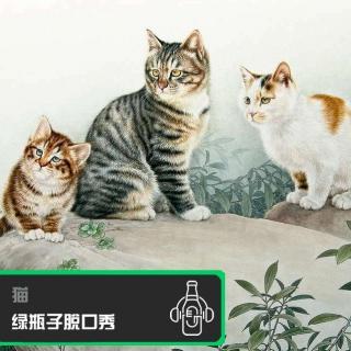 绿瓶子脱口秀:猫