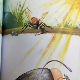 【砂泥蜂的诞生】~法布尔昆虫记