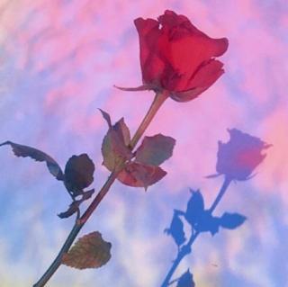 原创——你知我辛苦,我懂你不易,彼此依赖才是最深的相爱。