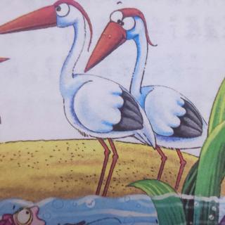 水边的呆鸟