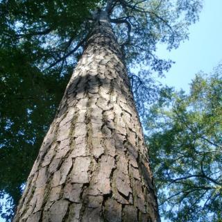 《我的生命是一棵树》作者/碑林路人