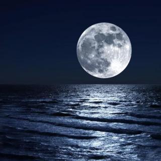 """月光外的""""疯子"""""""