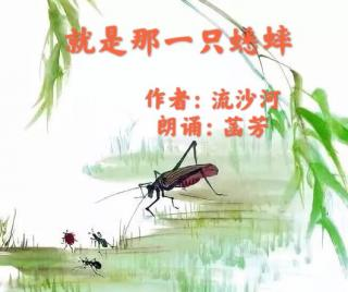 就是那一只蟋蟀🦗作者:流沙河  朗诵:菡芳