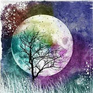 席慕容:月桂树的愿望