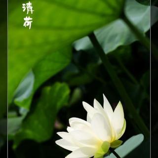 藏歌《菩萨的微笑》