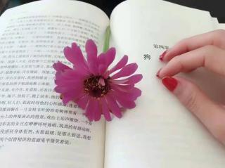 茶乐花香(来自FM155364939)