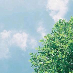 186 风的呼吸【推荐音乐】