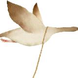 尼尔斯-骑鹅