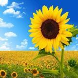 向阳花开悦读时光