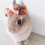 兔兔V讲故事