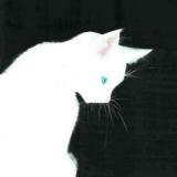 猫咛🐱「长乐府」