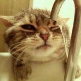 大猫Damon喵