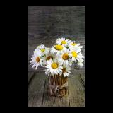 寻找蒲公英的向日葵