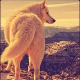 行走在荔枝的狼