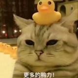 CV陈者.(超皮)