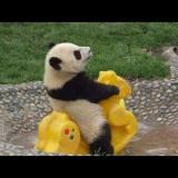 熊猫骑木马